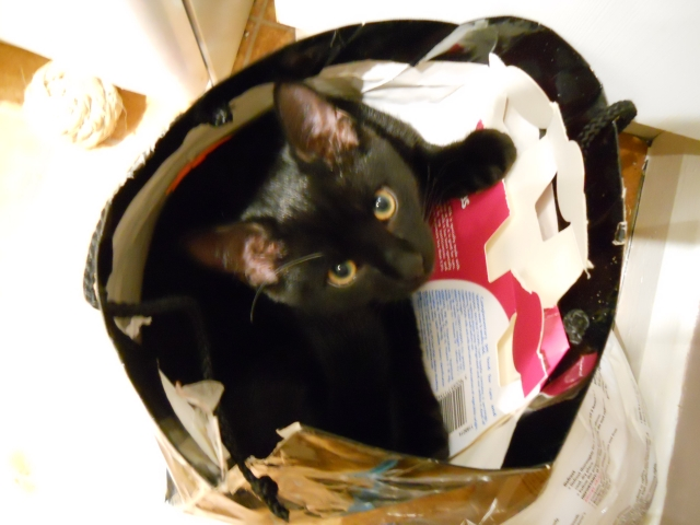 sometimes I'd like to be able to hide in the nearest bag too...