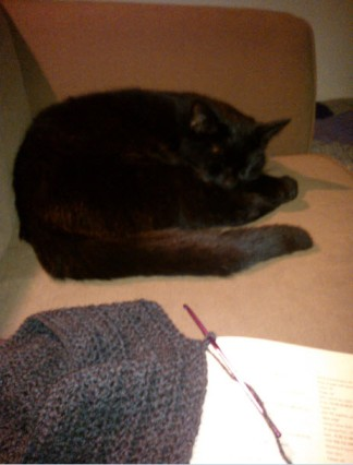1st January 2014:  Relaxing - Norman cat and crochet