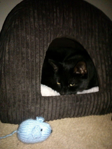 21st January 2014:  6 weeks later, Norman FINALLY got in his new bed.  (For 30 mins.  He has since returned to his bag of wool to sleep.  He has his own now as I was so fed up with him emptying mine...)