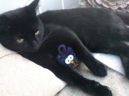 21st February 2014:  Norman getting involved in my crochet, again.  'I'm just giving it a cuddle, honest'.