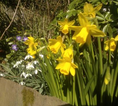 26th February 2014: Spring, springing in sunshine :o)