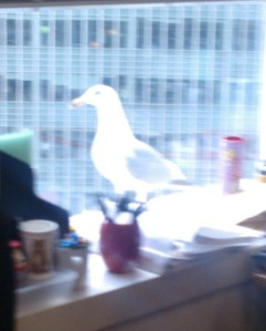 He wasn't this blurry (neither is the office) in real life