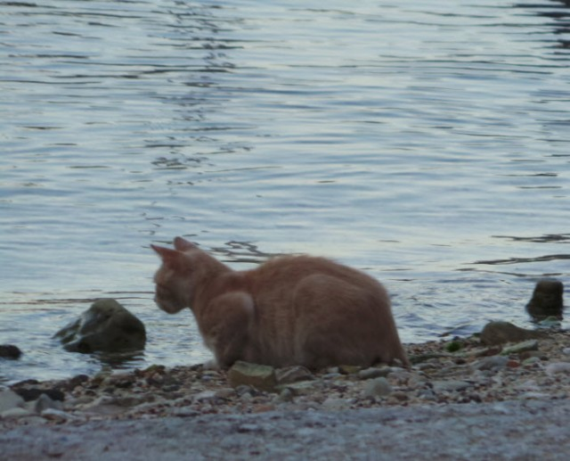 This cat was actually fishing for his supper :)