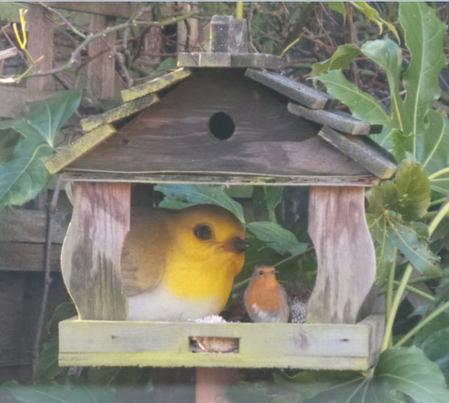 And finally, after 4 years of waiting, Big Robin has a friend :o)