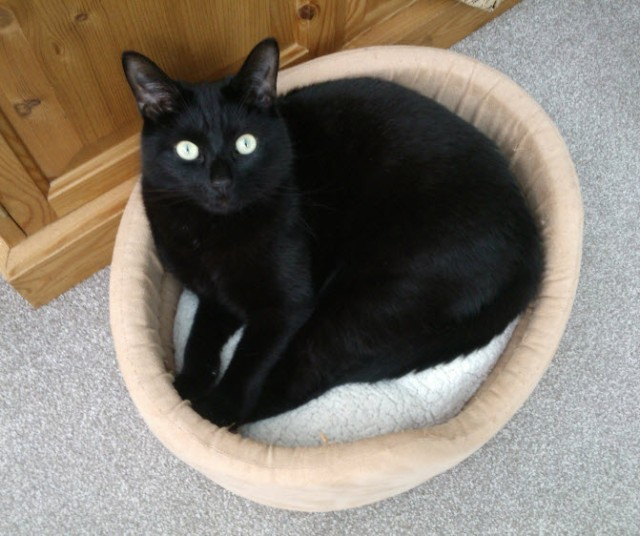 The innocent looking Norman Cat