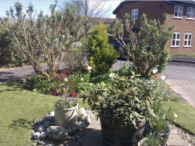 My teeny, tiny front garden