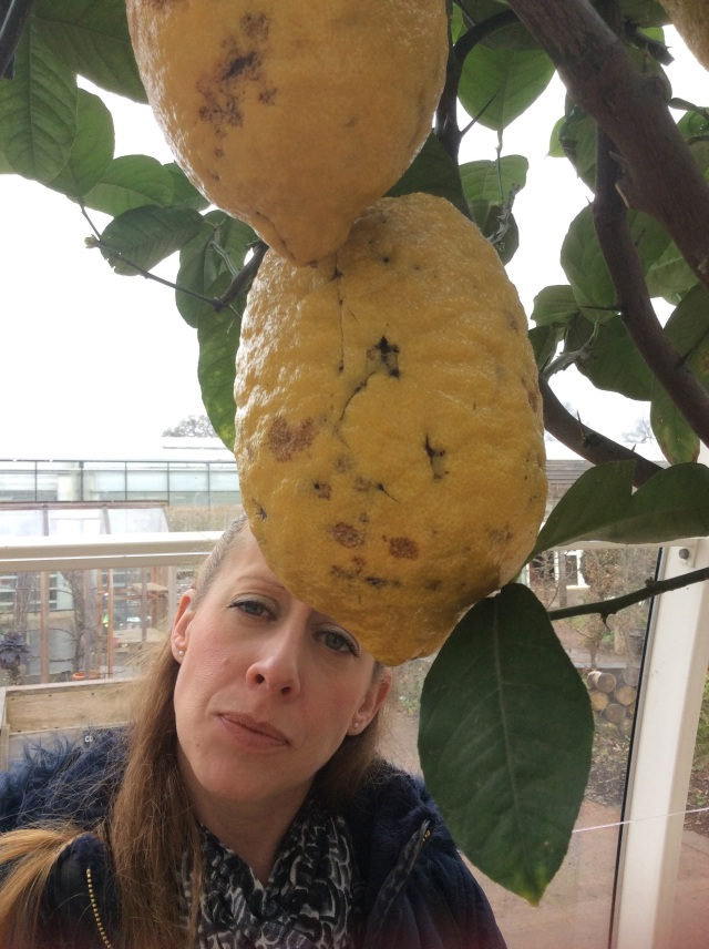The world's biggest lemon?