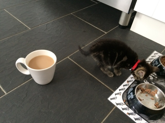 That is a normal size cup f tea and a teeny 8 week old fluff ball